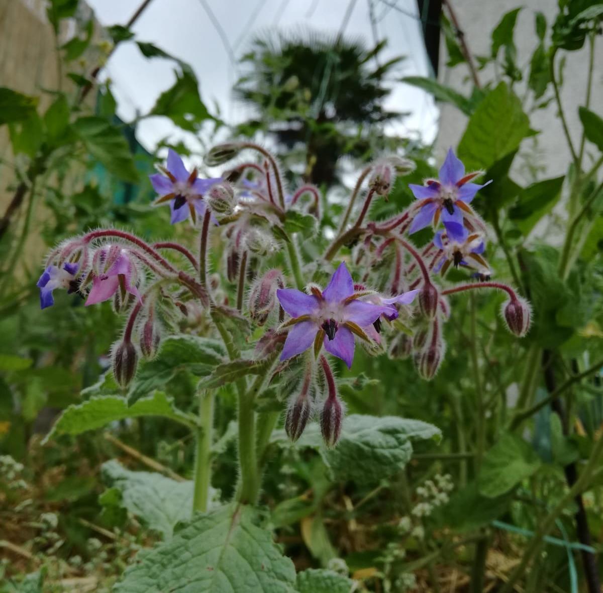 Fiori Da Piantare Nell Orto orto land - i fiori amici dell'orto sinergico